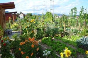 Stonogino vrtnarjenje